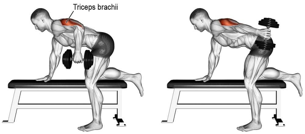 Dumbbell kickback hareketinin çalıştırdığı kaslar