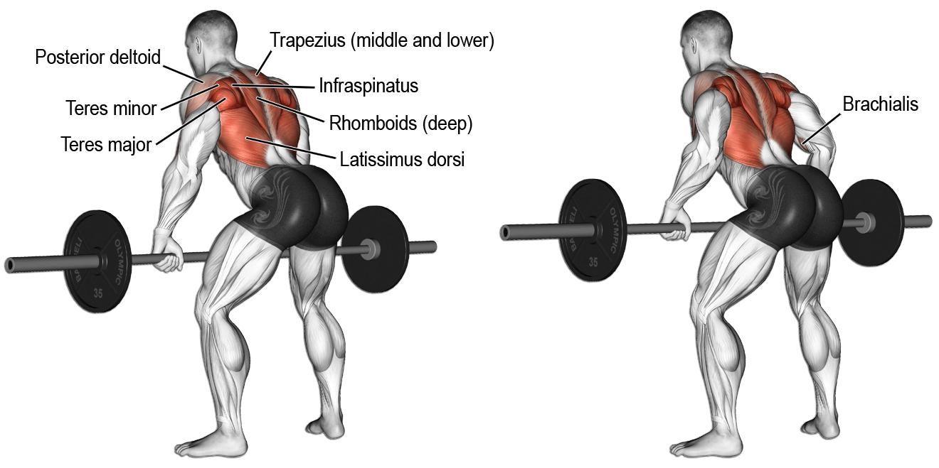row sırt hareket fitness