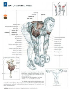 bent over lateral rise bench muscle