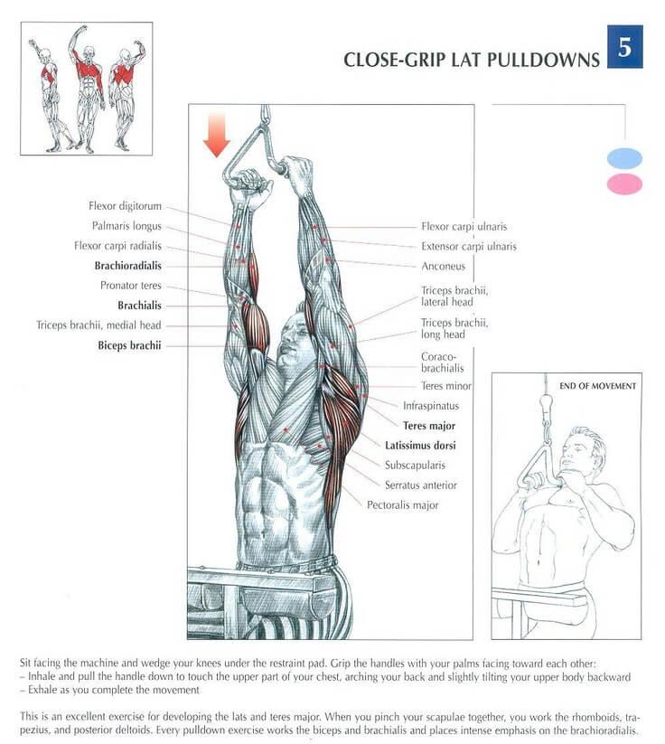 Close Grip Pulldown nereyi çalıştırır
