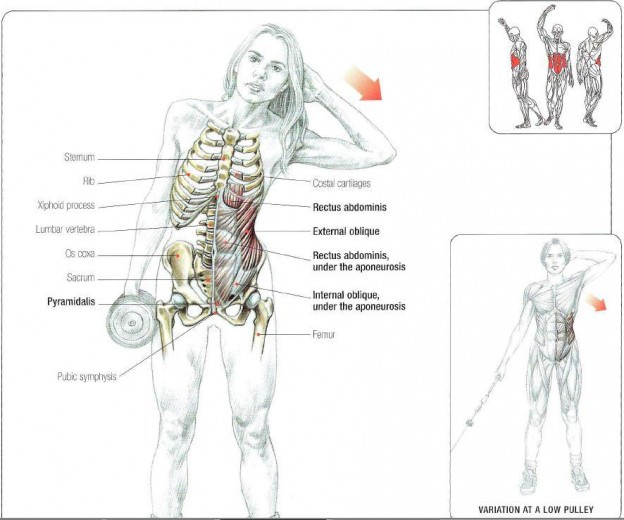 dumbbell side bend kas