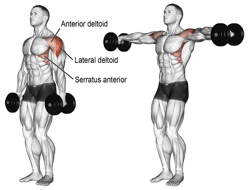 omuz yana açış hangi kasları