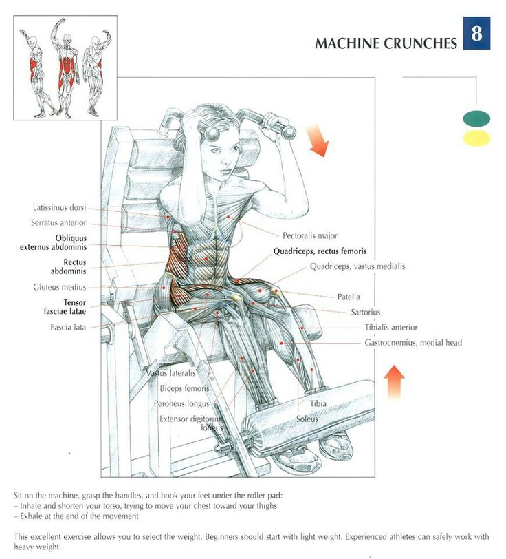 Machine Crunches