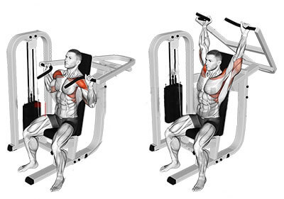 Machine shoulder press muscle