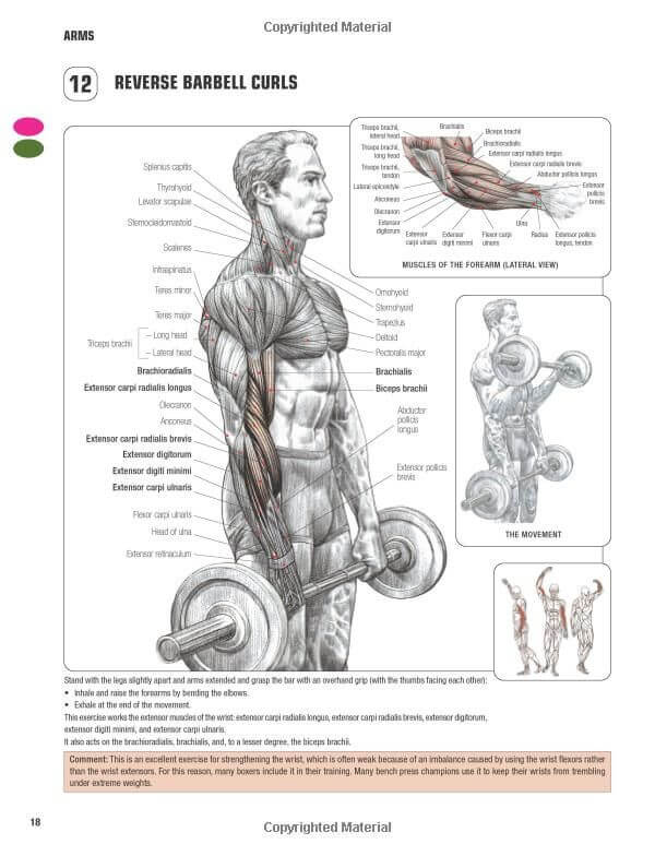 Reverse Barbell Curl nereyi