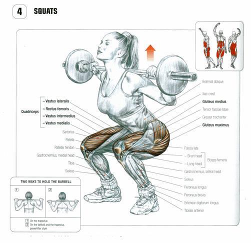Squat hangi kasları çalıştırır