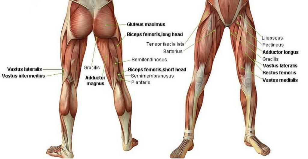 Bacak Kas Sistemi