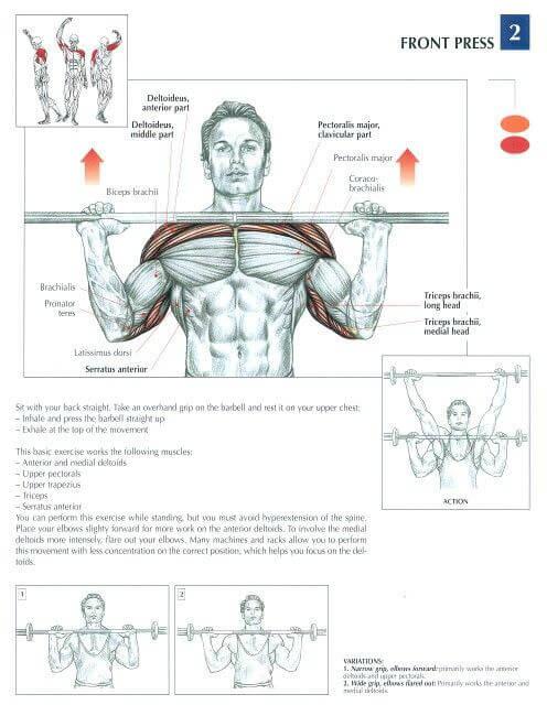 barbell shoulder press muscle