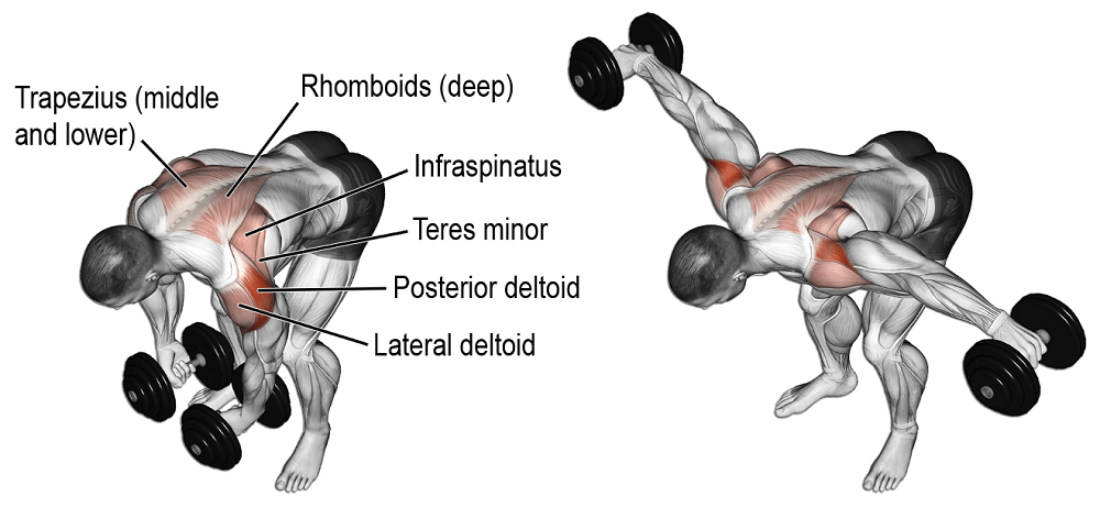 bent over lateral raise hangi kasları çalıştırır