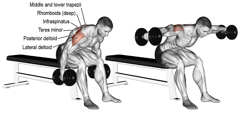 bent over lateral rise bench nereyi