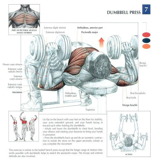 dumbell press hangi