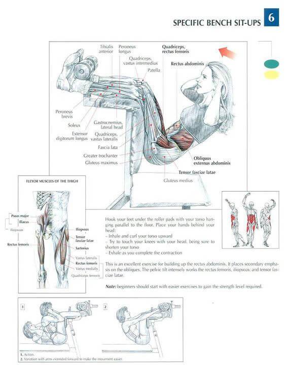 Hanging Upside Down Sit-Ups Baş Aşağı Mekik muscle