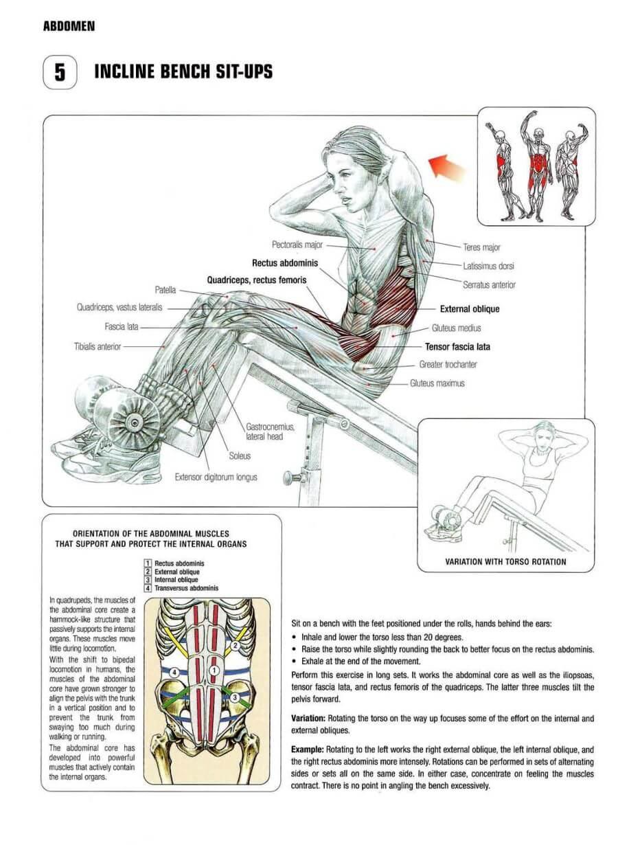Decline Sit Ups Muscle
