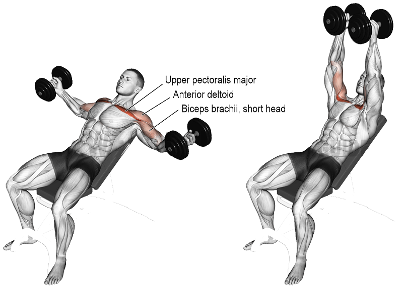 incline dumbell fly