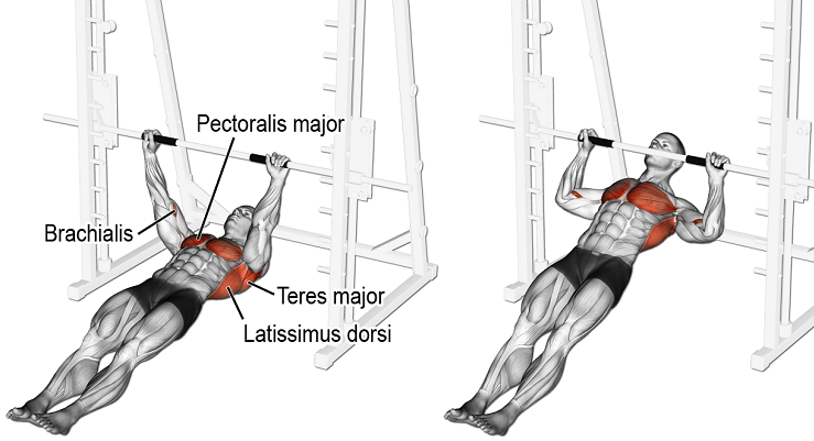 inverted row muscle