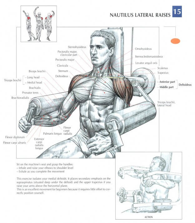 Lateral Raise Machine
