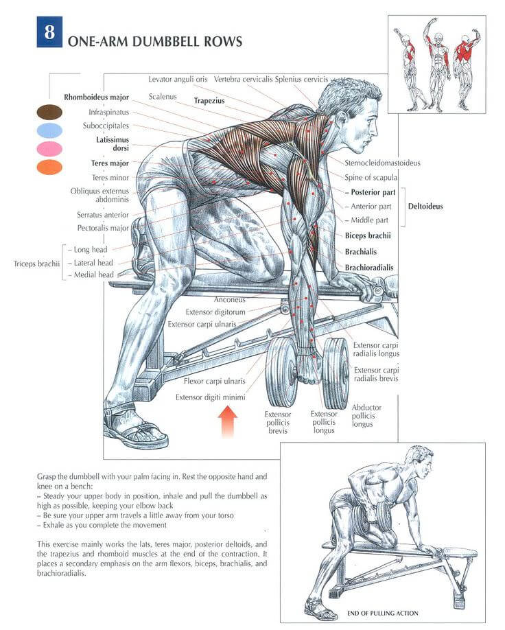 One arm dumbbell row nereyi