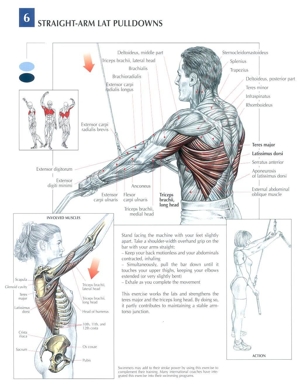 straight arm lat pulldown