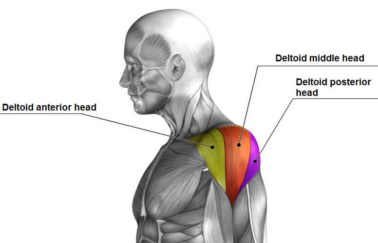 Dumbbell shoulder press omuz