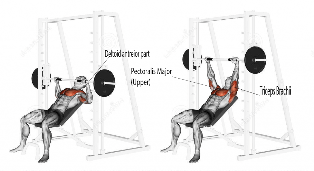 Smit Machine incline bench press muscle