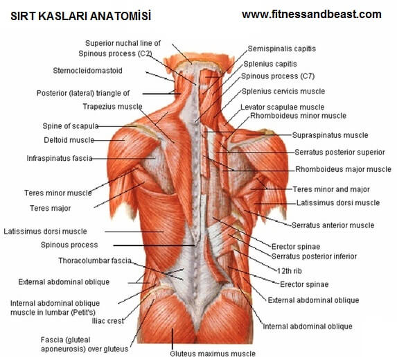 Rear lateral raise